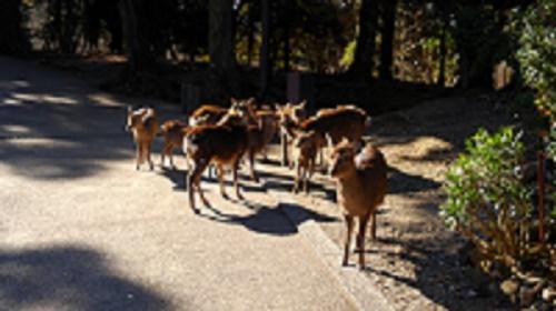 Deers in Nara Park