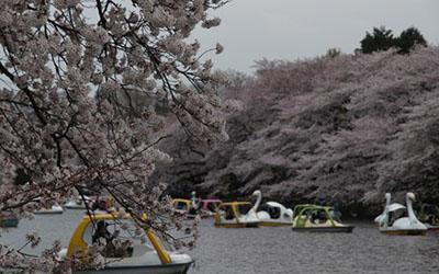 Inokashira park2
