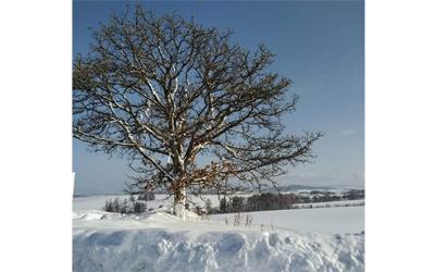 Tree in Biei Hills