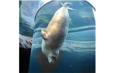 Asahiyama Zoo\\\'s Seal Museum