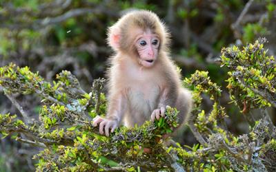 Iwatayama monkey park in Arashiyama