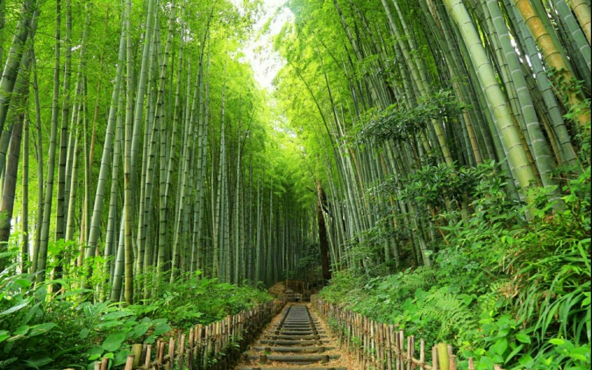 Old Samurai Road, 鵯坂 Hiyodori-zaka Slope, next to the Samurai residences. Feudal Samurai Retainers called 藩士 Hanshi used to go to the SAKURA castle by this sloping path!!