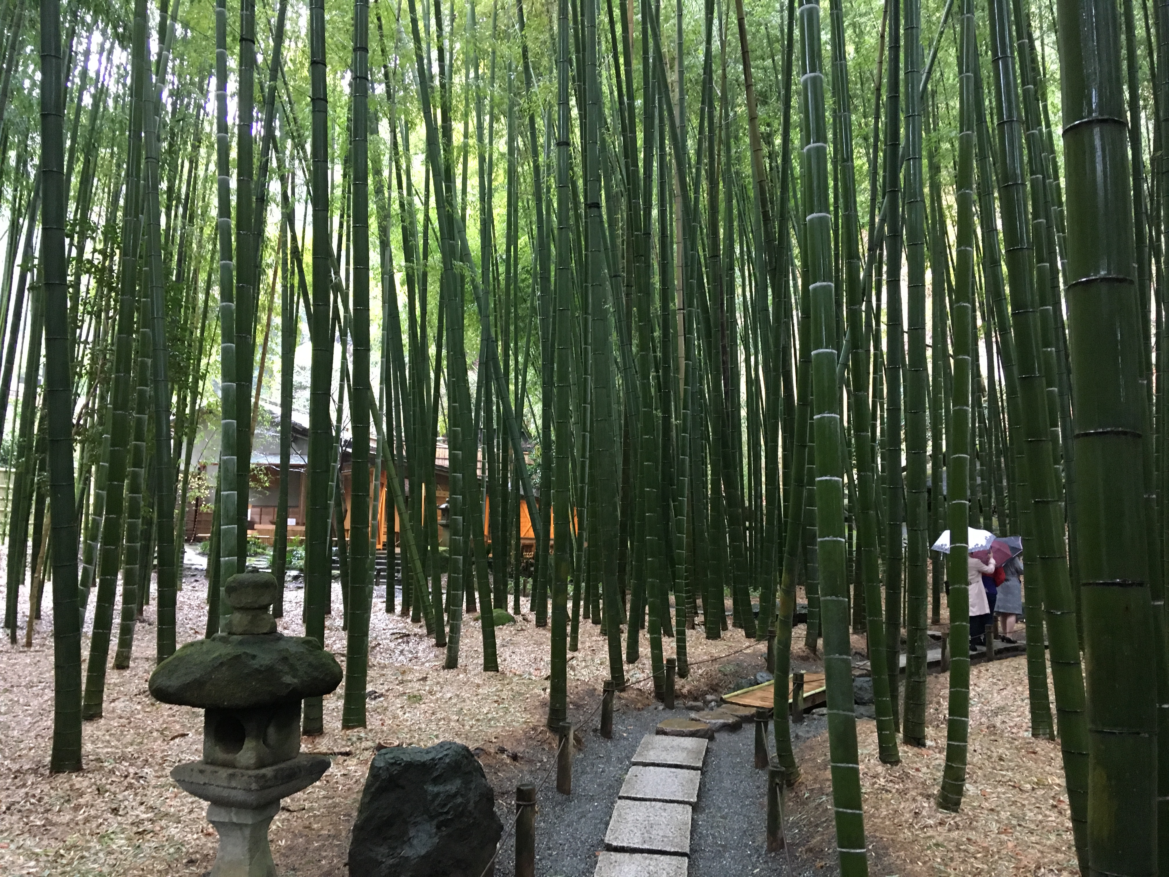 Bamboo Forest in Hokoku-ji Temple