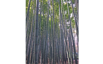 Hokokuji Temple : Known as a bamboo temple, it has a beautiful bamboo garden behind the main hall.